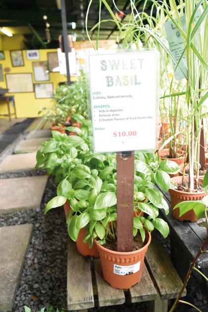ハーブの鉢植えなども購入できるので、家でプチ「オーガニック&地産地消」してみては?
